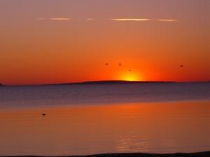 Pájaros volando al amanecer