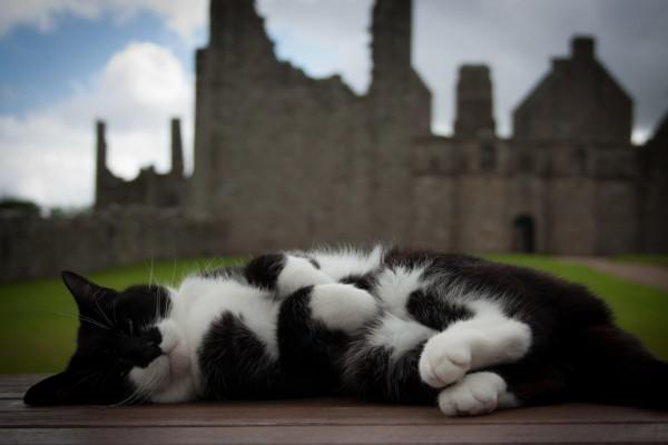 Un bonito gato negro y blanco tumbado