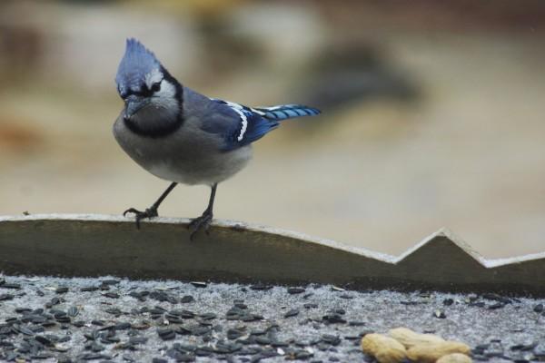 Pájaro observando las pipas