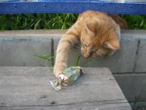 Gato intentando coger un caramelo