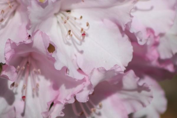 Unas delicadas flores