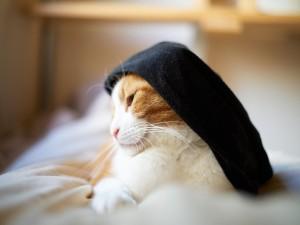 Postal: Gato con un trapo negro en la cabeza