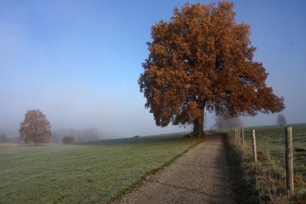 Gran árbol junto a un camino