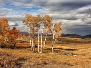 El parque nacional de Yellowstone en otoño