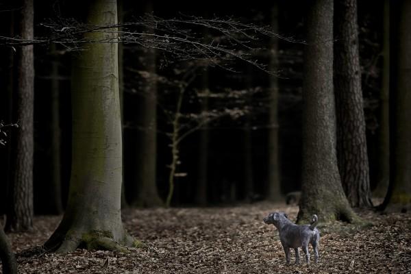 Un perro perdido en la oscuridad del bosque