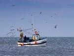 Gaviotas volando sobre un barco pesquero