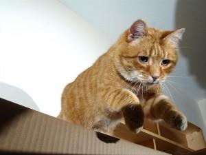 Postal: Gato entrando en una caja