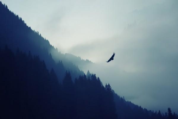 Águila volando en una mañana con niebla