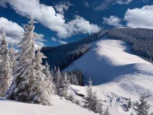 Postal: Montañas y pinos cubiertos de nieve