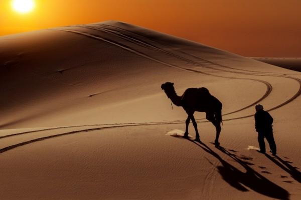 Camello y hombre caminando por el desierto