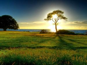 Postal: El sol tras un árbol