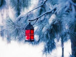Farolillo colgado de una rama de pino cubierto de nieve