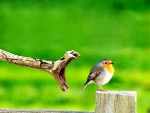 Postal: Serpiente atacando a un pájaro