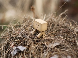 Postal: Danbo atrapado en una montaña de ramas y hojarasca