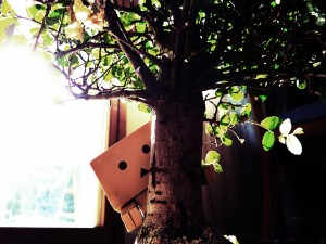 Postal: Danbo detrás de un bonsai