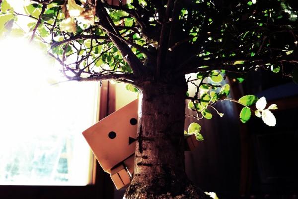 Danbo detrás de un bonsai