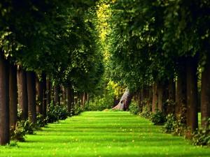 Postal: Camino de hierba entre grandes árboles