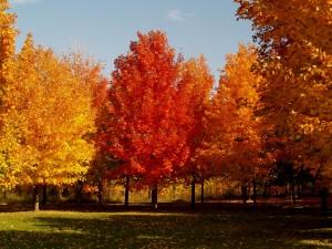 Bonitos colores en los árboles otoñales