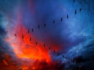 Gansos en un bonito cielo