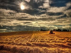 Postal: Trabajando en el campo bajo los rayos del sol