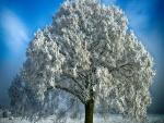 Árbol blanco en el campo
