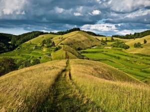 Camino entre campos sembrados