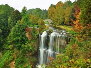 Postal: Vista de un río cayendo en cascada entre árboles otoñales