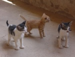 Tres simpáticos gatitos