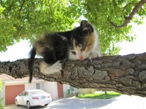Gatito en lo alto de un árbol