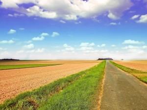 Carretera entre campos sembrados