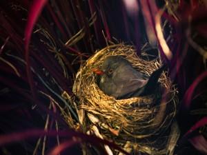 Postal: Pequeño pájaro en el nido