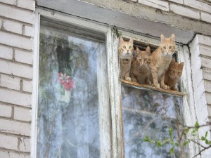 Postal: Gatos curiosos en una ventana