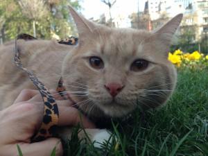 Postal: Acariciando a un bonito gato
