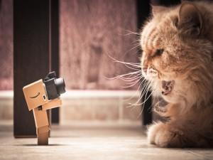 Postal: Danbo fotografiando a un gato