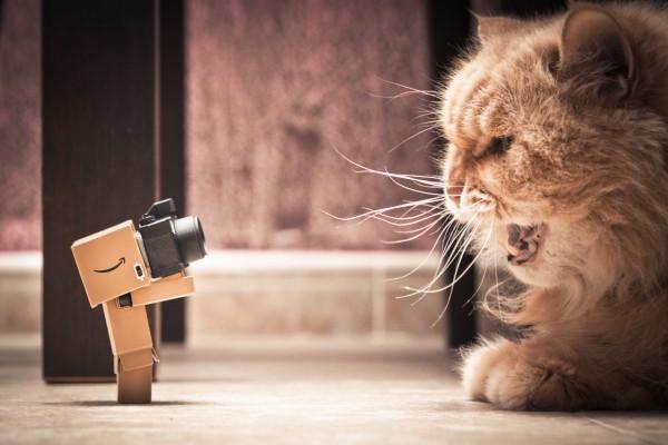 Danbo fotografiando a un gato