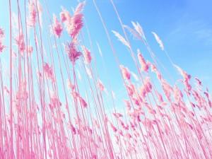 Bonitas plumas de color rosa