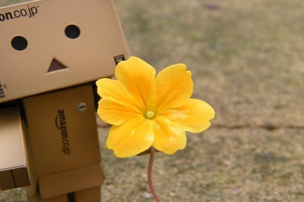 Danbo con una bonita flor amarilla
