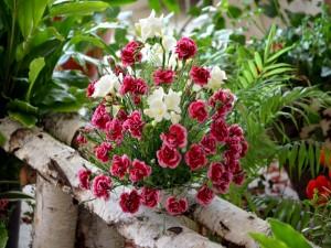 Pequeños claveles y fresias en una maceta
