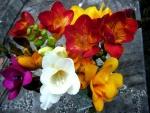 Ramo de fresias de varios colores