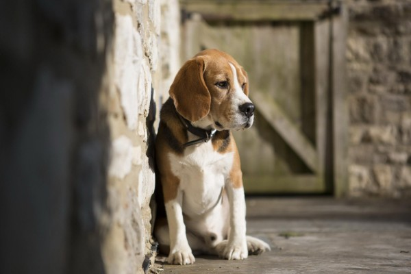 Un perro solitario