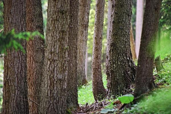 Árboles en un bosque
