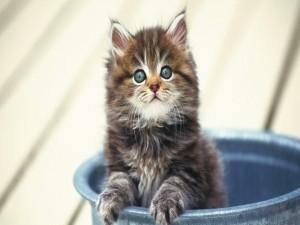 Postal: Un lindo gatito dentro de un cubo