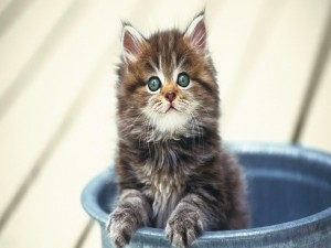 Un lindo gatito dentro de un cubo