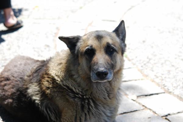 Un perro con mirada triste