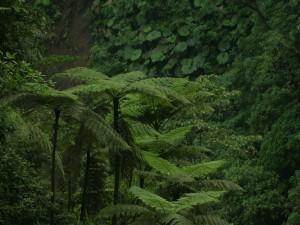 Postal: Plantas y árboles en la frondosa selva