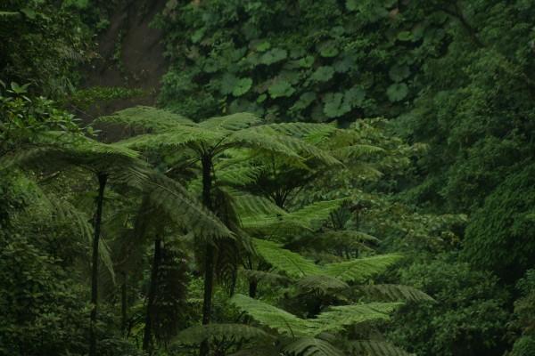 Plantas y árboles en la frondosa selva