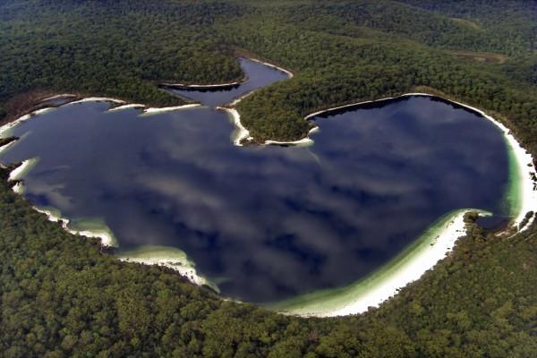 Lago rodeado de vegetación