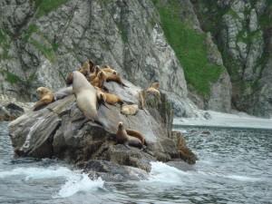 Grupo de leones marinos sobre una roca