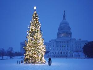 Postal: Un hombre observando un gran árbol de Navidad iluminado