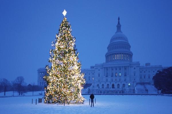 Un hombre observando un gran árbol de Navidad iluminado